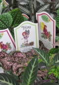Green plants for your fairy gardens
