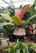 Lenca Pottery with philodendron