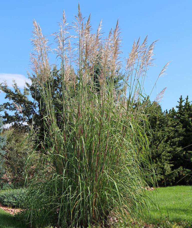 Perennial And Annual Ornamental Grasses