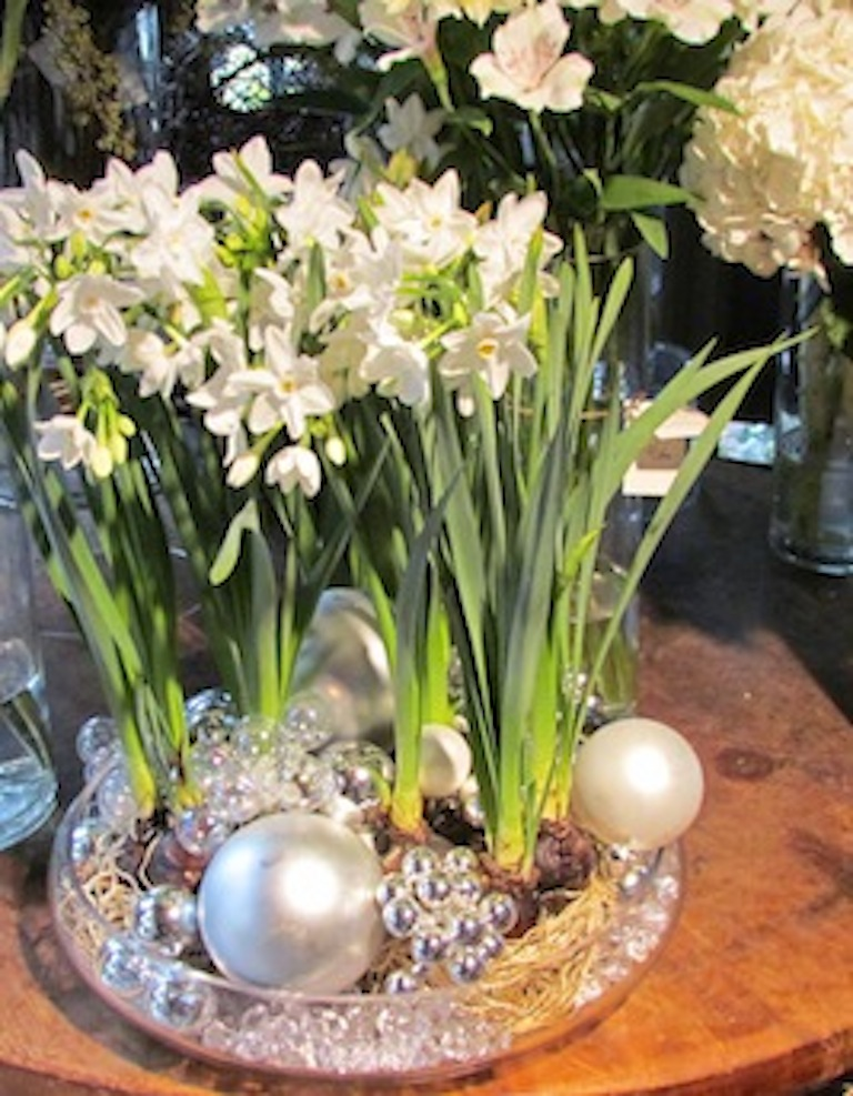 How to force paperwhite narcissus for indoor blooms 2 7 mightylinksfo