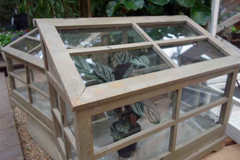 Wood Framed Terrarium in Boulder Colorado