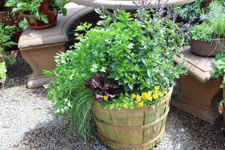 Bushel Basket with Herbs and Pansies