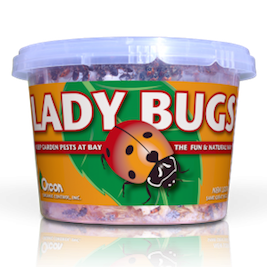 Live Lady Bugs for Natural Pest Control