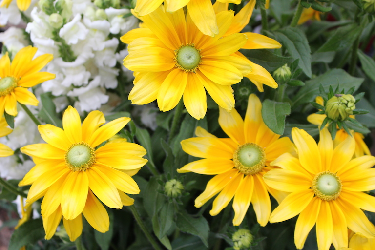 Fall is also a great time to plant perennials