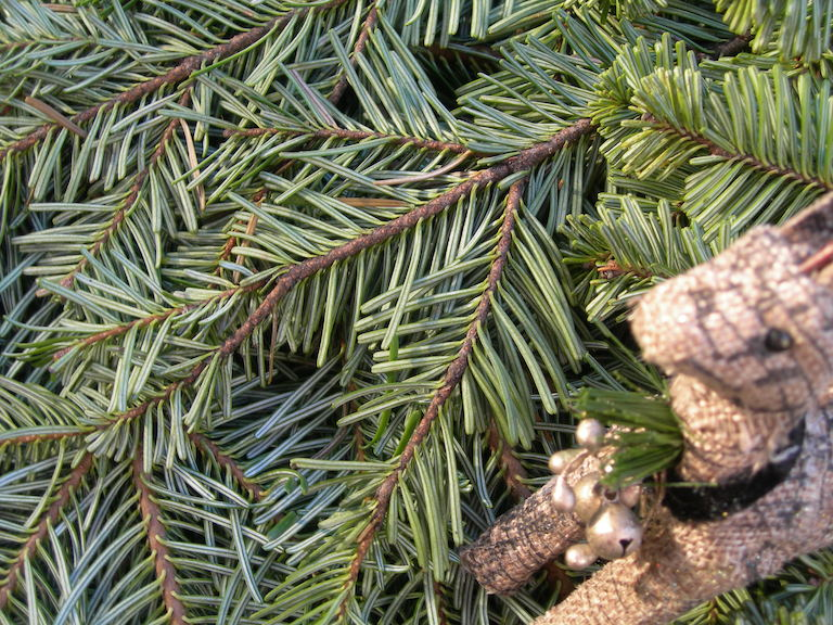 Evergreen Boughs to Mix and Match by the pound