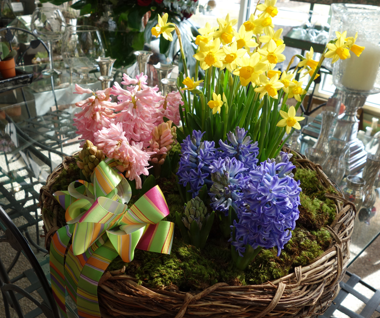 Blooming Hyacinth and  Daffodil Basket