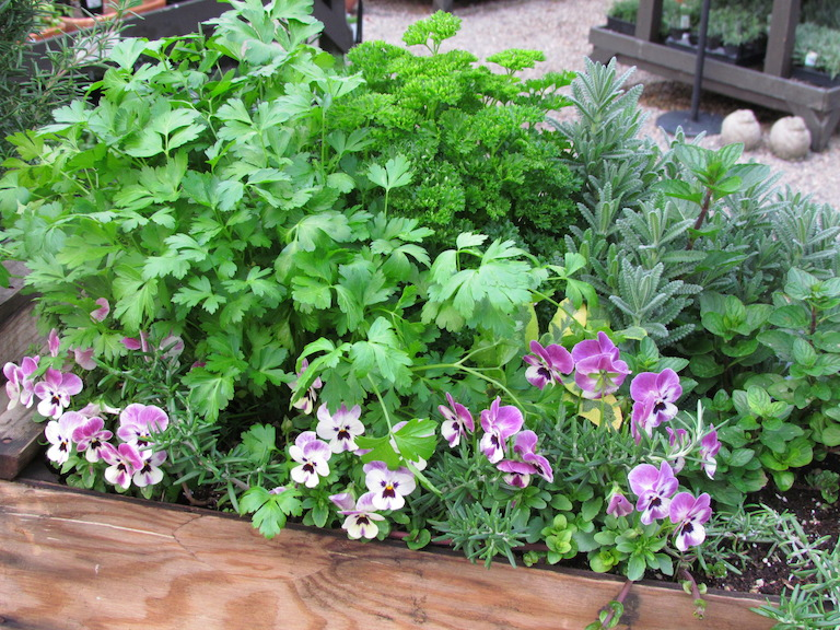 Herb Garden with Pansies