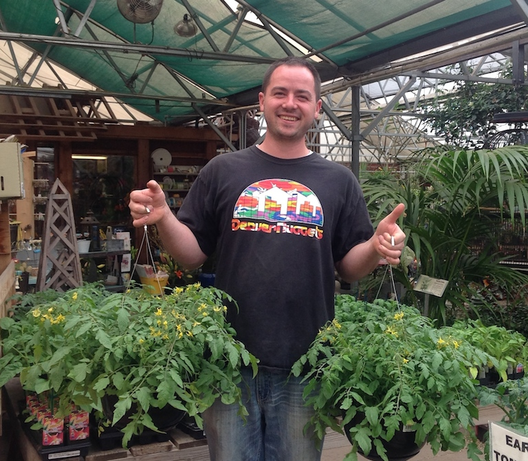 Trevor with tomatoes bred for hanging baskets