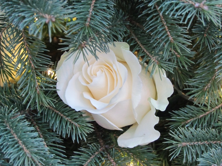 The Perfect Ornament--Fresh and Fragrant Real White Roses