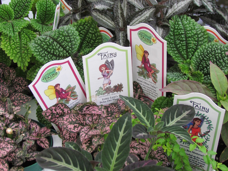 Fairy Garden plants for small spaces