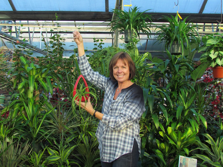 Jill holding a tillandsia and surrounded by dracaenas