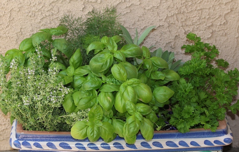 Herbs gardens for great cooks
