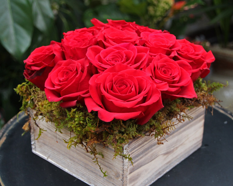 One Dozen Red Modern and Compact Red Roses -$85