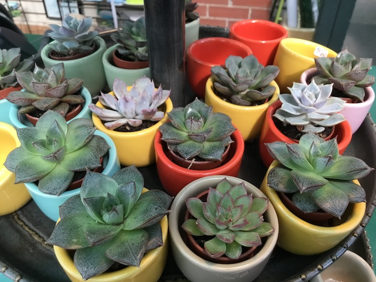 Mini pots with succulents
