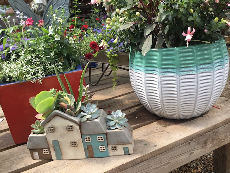 Succulents in Decorative House Planter