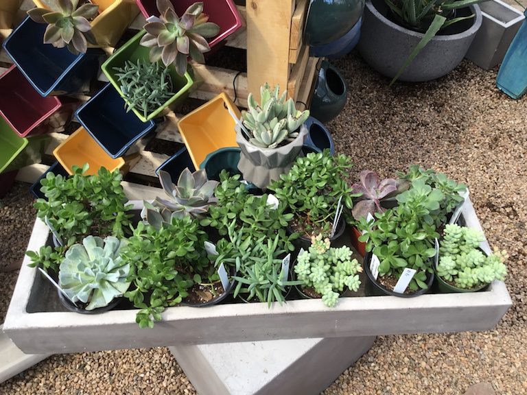 Succulents look awesome in concrete planters