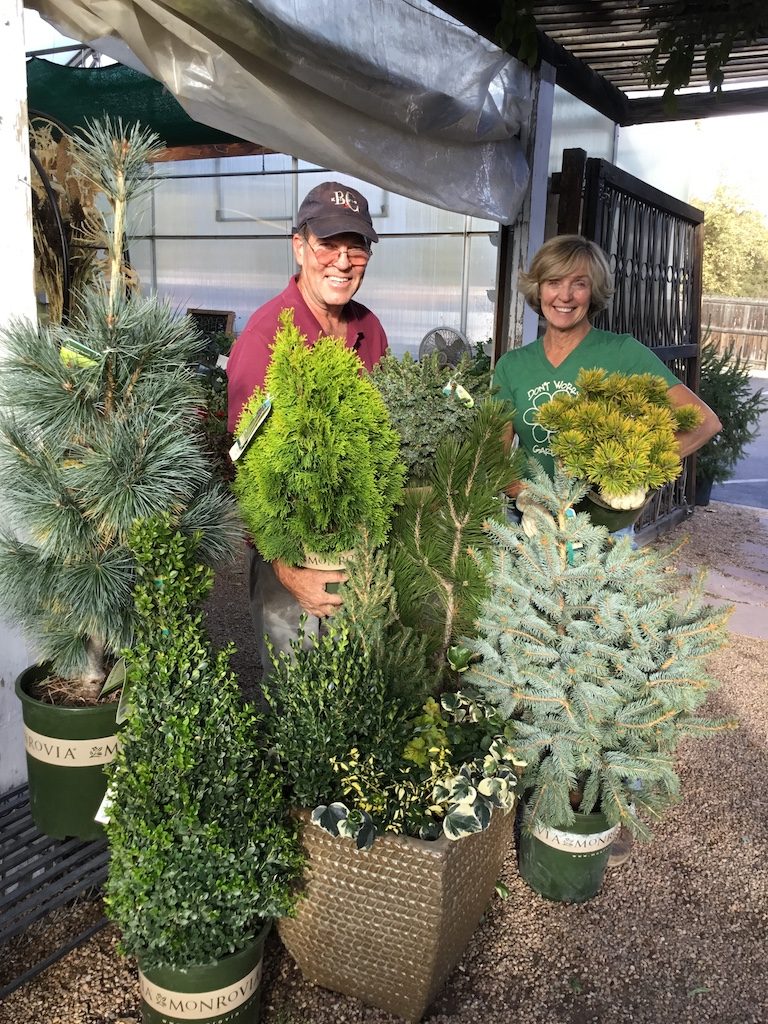 Container gardening with evergreens