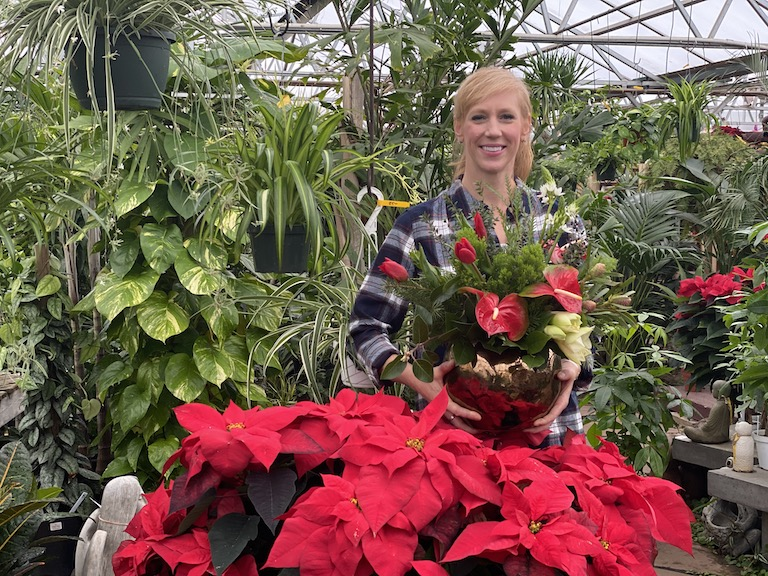 Poinsettia plants and anthurium flowers in December