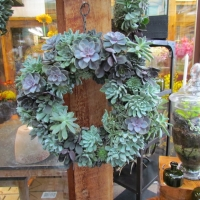 Wonderful Succulent Wreaths